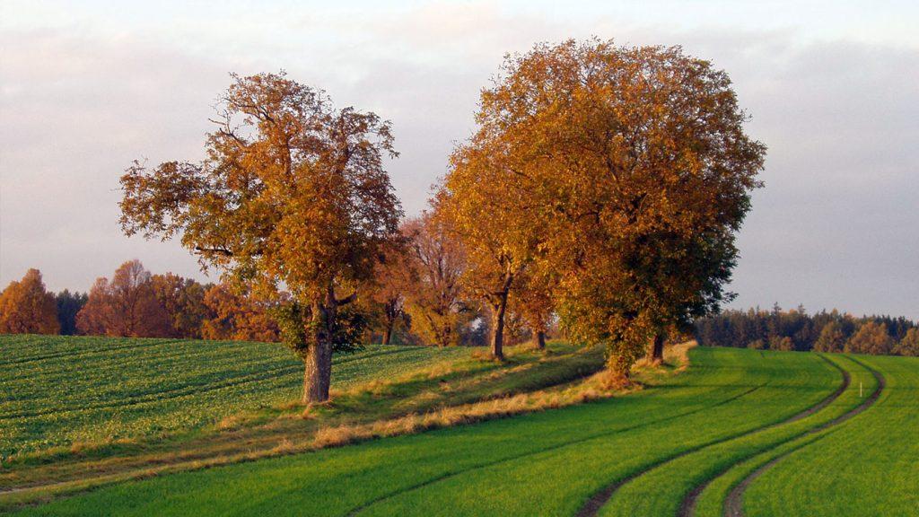 Landschaft bei Unterweilbach im Dachauer Land