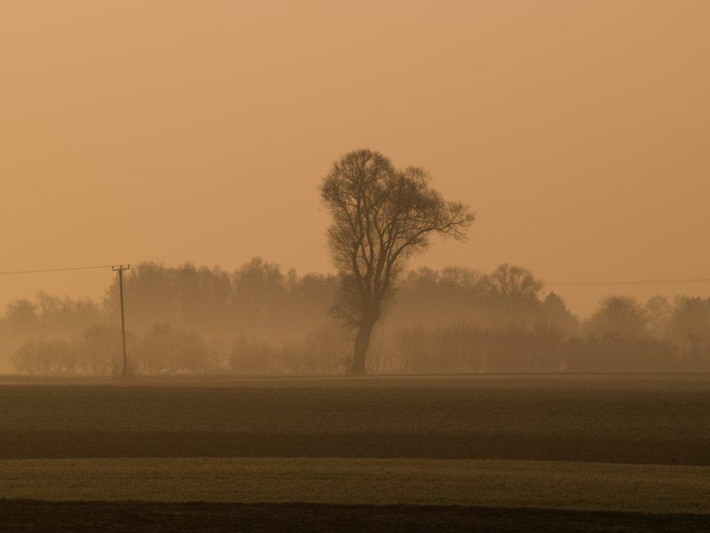 Mooslandschaft im Dachauer Land