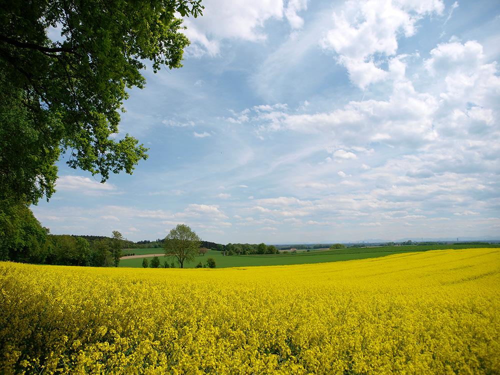 Landschaft bei Röhrmoos im Dachauer Land